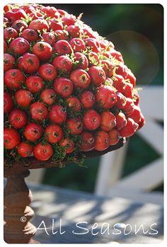 All Seasons: Malus appeltjes bol: hier zou je een paddestoel van kunnen maken. Rood met witte stippen