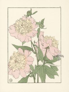 Foord Pochoir Flower Studies 1901