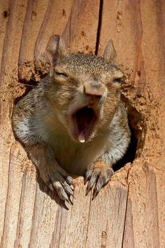 I said 'STOP ALL THAT NOISE OUT THERE... SOME OF US ARE TRYING TO SLEEP IN HERE!!'