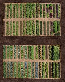 Martha's vegetable garden was laid out with rigorous geometry to yield maximum results and easy access. The major cross-axial paths are 10 feet wide and can accommodate a garden cart or a pickup truck. Each row of vegetables is 30 inches wide, and th. Vegetable Garden Tips, Veg Garden, Edible Garden, Home And Garden, Garden Cart, Garden Bed, Vegetable Recipes, Organic Gardening, Gardening Tips