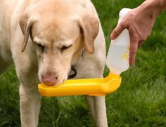 This water dispenser that makes it easy to carry and dispense some sweet, sweet H2O for your dog. | Can You Get Through This Post Without Spending $50?