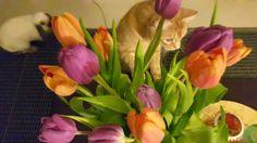 Kahvakuula kainalossa: Kevättä kohti innolla ja uusin kujein!