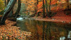 Resultado de imagen de imagenes de otoño