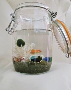 Marimo Ball Aquarium for Pet Marimo and fish Tank by timeremains Aquarium Kit, Aquarium Fish Tank, Betta Fish Tank, Beta Fish, Fish Tanks, Marimo Moss Ball Terrarium, Pet Supermarket, Bubble, Fish Tank Design