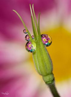 Morning Dew Drops with pink yellow green Dew Drops, Rain Drops, Close Up Photography, Nature Photography, Levitation Photography, Exposure Photography, Winter Photography, Beach Photography, Drip Drop