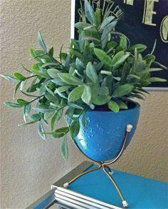 "Search Results for ""planter"" – Hepcats Haven Planter Table, Planter Pots, Ceramic Table, Restoration, Mid Century, Flooring, Blue, Hardwood Floor, Floor"