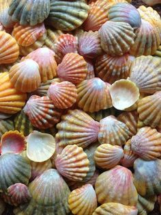 Shell Color Palette....amazingly diverse.....kinda like people,Thank Goodness :))