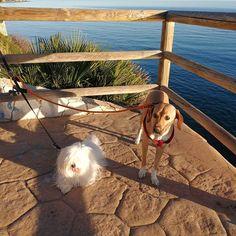 #Paseo con Penny y Popi 01/18 #Peludos #Mascotas #Perros #Momentos #Dog #RincóndelaVictoria #ElCantal