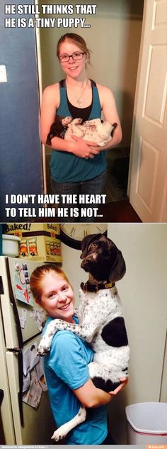 Crazy funny pictures: He still thinks. Your best place for daily Crazy funny pictures Crazy Funny Pictures, Funny Animal Pictures, Cute Pictures, Animal Pics, Funny Pics, Funny Stuff, Gsp Puppies, Tiny Puppies, I Love Dogs