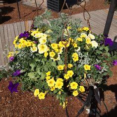 Yellow silver purple iron hanging basket 2014