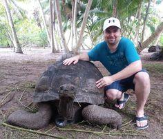 Auf der Insel leben zahlreiche Riesenschildkröten #taipan_seychellen #seychellen #denisprivateisland