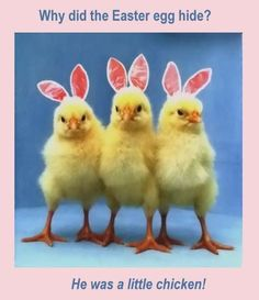 Easter Joke. Q: Why did the Easter egg hide? A: He was a little chicken!