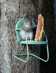 Why don't my squirrels do this....they skip their corncobs and go right for the birdseed every time