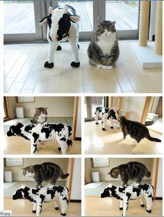 maru the cat <3
