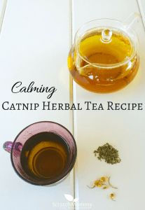 Calming Catnip Herbal Tea Recipe (a perfect blend of 3 herbs to soothe and calm)- Scratch Mommy