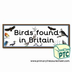 Bird Themed Resources - Primary Treasure Chest Britain Uk, Great Britain, Teaching Activities, Teaching Ideas, Letter Sounds, Founded In, Treasure Chest, Phonics, Crafts For Kids