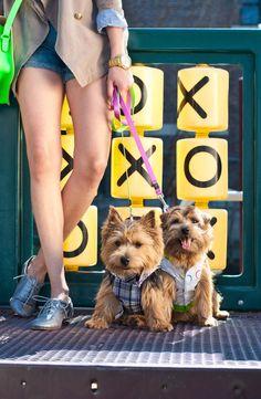 DOG FASHIONS: 6 SPRING DOG-WALKING LOOKS | Pawsh MAGAZINE & STUDIO