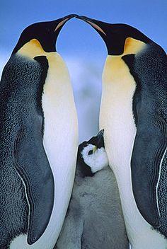 Un Pingüino