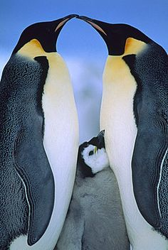 See a penguin in its natural habitat. Here's a website with a list of place where you can see penguins in the wild: http://birding.about.com/od/birdingtravel/a/Where-To-See-Penguins.htm