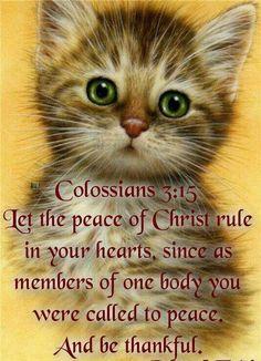 Colossians 3:15 via: Joan Stephens