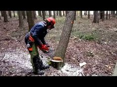 Felling four trees suddenly chainsaw Husqvarna 562 XP ! Leaf Blower, Chainsaw, Suddenly, Outdoor Power Equipment, Trees, Twitter, Youtube, Tree Structure, Wood