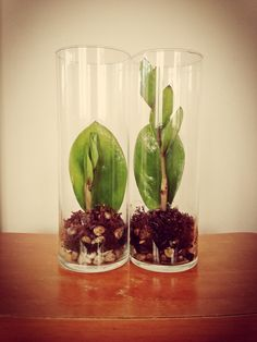 The Zamioculcas zamiifolia pet leaves gave birth.
