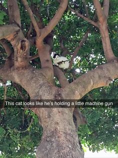 Funny Animal Pictures halt, or i'll shoot, i'm not coming down till you…