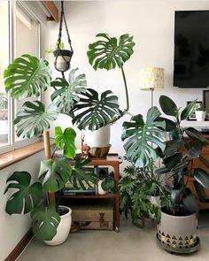 5 perfis no Instagram para quem ama ter plantas em casa
