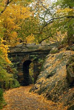 Autumn Arch, Central Park, NYC