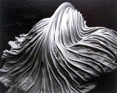 Edward Weston Cabbage Leaf