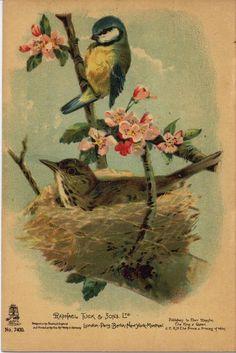 Royal Art, Chinoiserie Wallpaper, Vintage Birds, Site Design, Nursery Rhymes, Royalty, Pretty, Artist, Sons
