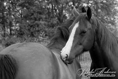 Sweet horses early in the morning!