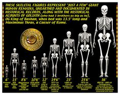 giants evolution chart 6 feet to 36 feet, , Goliath who had three brothers as big as he,  OG King Bashan whose bed was 13.5  feet long and Maximinus Thrax, a Cesar of Rome, just a few giant human remains, unearthed and document in historical history,