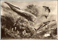 Ancient Sea Illustration
