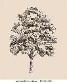 red oak tree sketch - Google Search