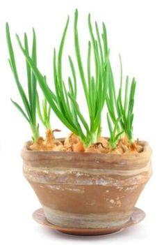 how to start an indoor herb garden - How To Start An Indoor Herb Garden