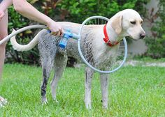 How to make pvc dog wash certainly an easier way to bathe a large this washing system offers a 360 degree ring of water that jets gently around your solutioingenieria Choice Image