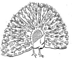 free printable peacock coloring pages coloring 4 pinterest - Drawing For Kids To Color