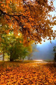 A walk through a lonely autumn park (Plovdiv, Bulgaria) by Drago Bojkov Beautiful World, Beautiful Places, Beautiful Pictures, Beautiful Nature Scenes, Nature Sauvage, Autumn Scenes, Autumn Park, All Nature, Foto Art