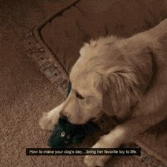 Dog's favourite toy upsized funny pics, funny gifs, funny videos, funny memes, funny jokes. LOL Pics app is for iOS, Android, iPhone, iPod, iPad, Tablet