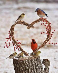 Little Birds, Love Birds, Beautiful Birds, Angry Birds, Pet Birds, Love Is Sweet, Cute Love, Pixar, Bird Quotes