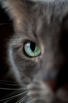 Cat Eye Photography | Updegraff Laser Vision