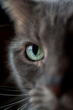 Cat Eye Photography   Updegraff Laser Vision