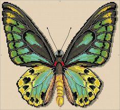 Richmond Birdwing Butterfly Cross Stitch Chart Download   sewandso