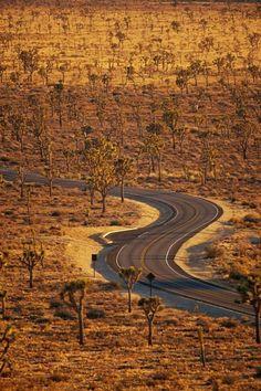 Arizona - Driving through Joshua Tree NP