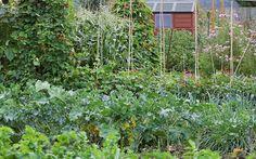 veg-garden-grow-your-own-allotment-veg-plot-edible-garden