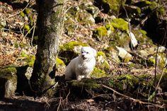 Die neue Woche fängt ja schon mal gut an  Luna und ich sind schon seit 2 Uhr auf.. Die Kleine musste sich nämlich 2x übergeben  Ich hoffe das es nur eine kleine Magenverstimmung ist.   #woof_tastic #nature_cuties #lazybonezz #sendadogphoto #lacyandpaws #meowvswoof #malteseworld_feature #dogsofinstagram #animaladdicts #dogboolove #amazing_picturez_animals #worldofcutepets #my_loving_pet #puppiesxdogs #Excellent_Dogs #adorableanimals #bestwoof #cutepetclub #topdogphoto #igclubdogs #fluffypack…