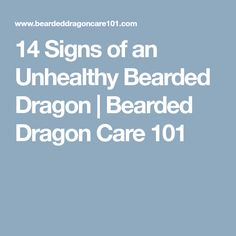 14 Signs of an Unhealthy Bearded Dragon | Bearded Dragon Care 101
