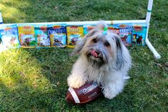 RSVP for #SuperDogSunday Twitter Party with Zuke's for a chance to win $750+ in prizes! #Giveaway Details: http://www.todogwithlove.com/2015/01/rsvp-for-superdogsunday-twitter-party.html