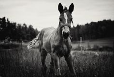 A beautiful young foal playing in a paddock